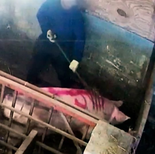 farm workers abuse