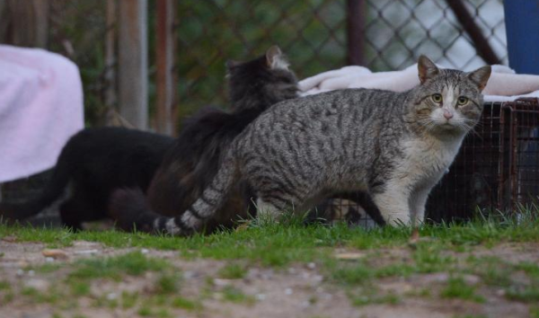 Australia is killing MILLIONS of feral cats