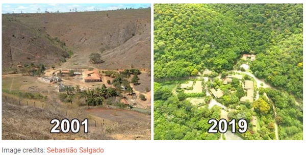 Photographer And His Wife Plant 2 Million Trees In 20 Years