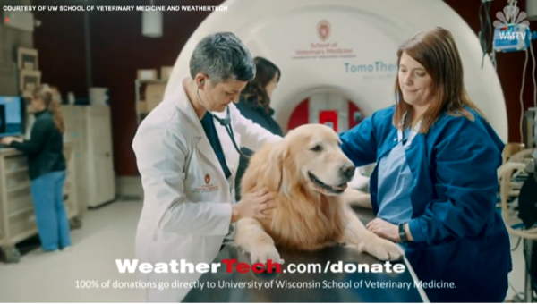 golden retriever dog chemo